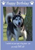 "Siberian Husky-Happy Birthday - ""Are You Really THAT Old"" Theme"
